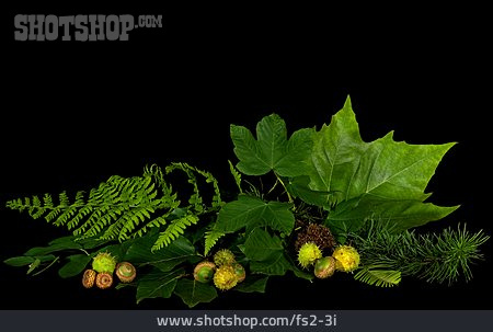 Leaf, Arrangement, Package, Variation