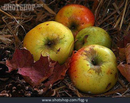 Apple, Fruit, Autumn Leaves