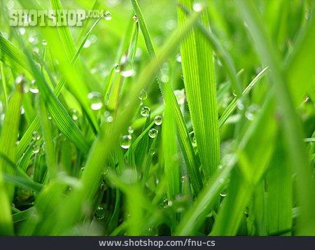 Grass, Waterdrop