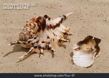 Sand, Mussel, Snail