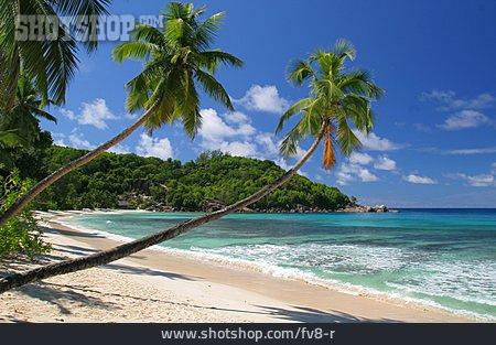 Beach, Palm, Bay