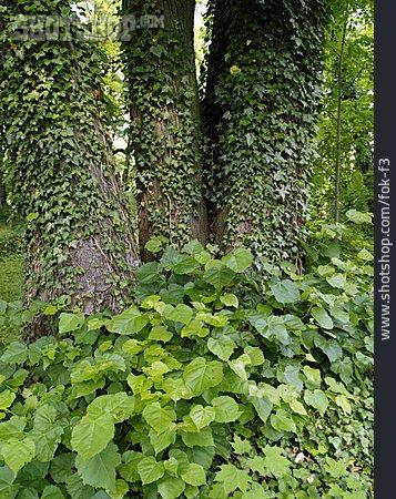 Tree Trunk, Overgrown