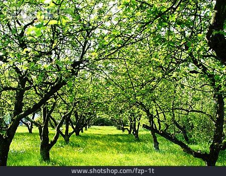 Fruit Tree, Orchard, Fruit Orchard