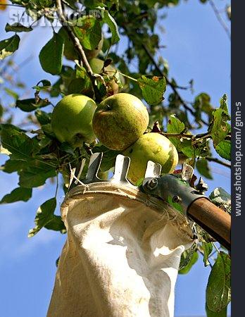 Apple, Pick, Apple Pickers