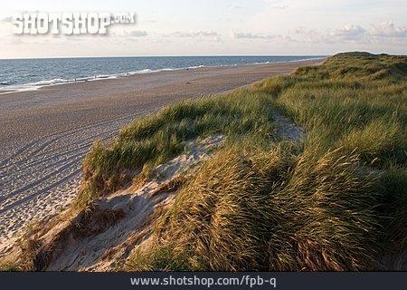 Beach, Dune