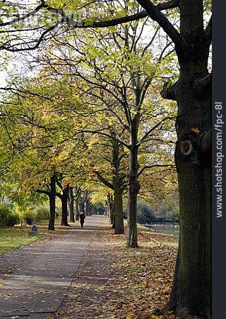 Autumn, Alley