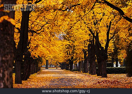 Park, Autumn, Alley, Chestnut Tree