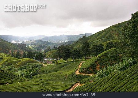 Asia, Hill, Tea Cultivation, Malaysia