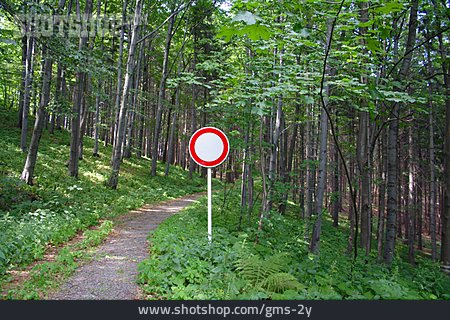 Forest, Nature, Path