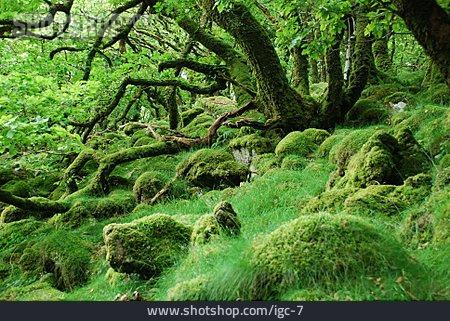Forest, Moss, Overgrown