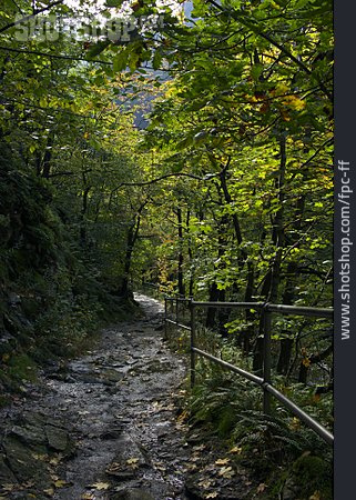 Hiking, Trail, Deciduous Forest