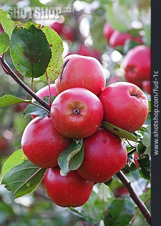 Apple, Red, Reif
