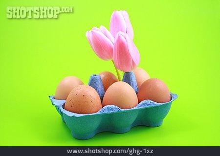 Egg, Tulip, Egg Carton