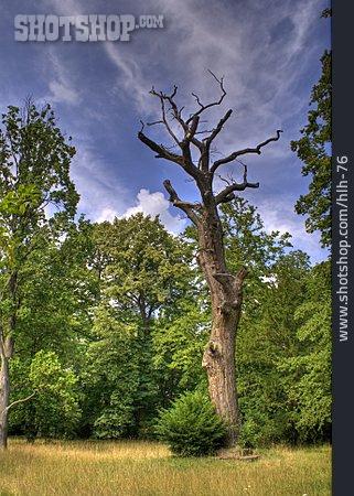 Tree, Dead Plant