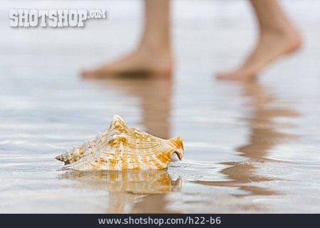 Wellness & Relax, Mussel, Vitality, Barefoot