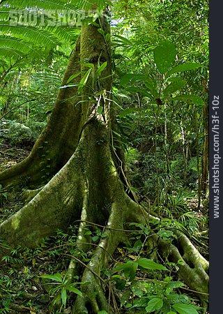 Jungle, Vegetation, Tree Root