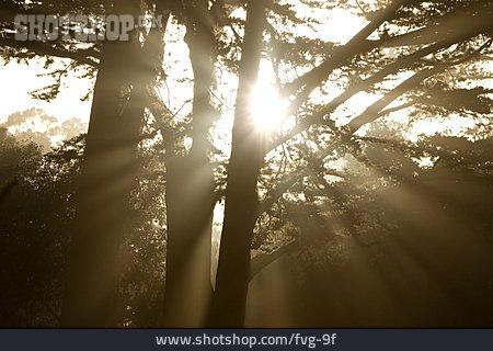 Sunbeam, Mystical