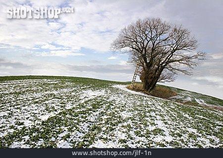 Field, Oak Tree, Winterly, Wooden Ladder