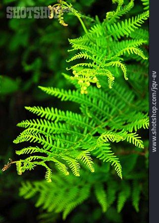 Fern, Fern Branch, Ferns