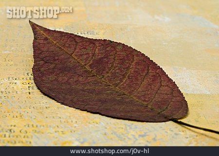 Dried Food, Autumn Leaf