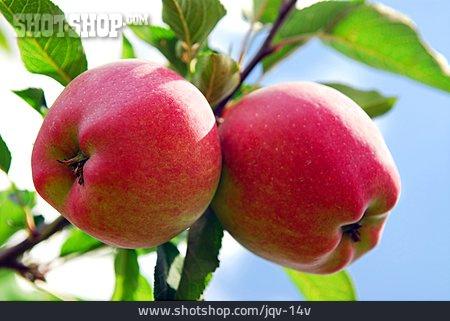 Couple, Apple, Twig