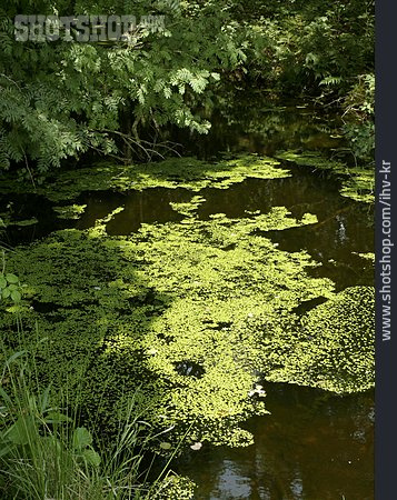 Water, Duckweed, Duck Waterlens
