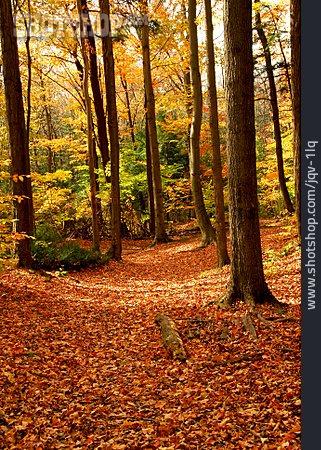Forest, Autumn, Path