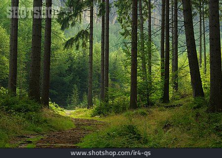 Forest, Path, Trail
