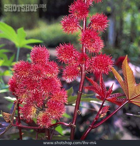 Tree, Flower