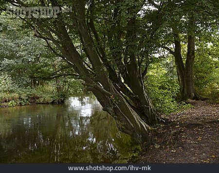 Forest, Lühe