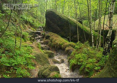 Path, Trail