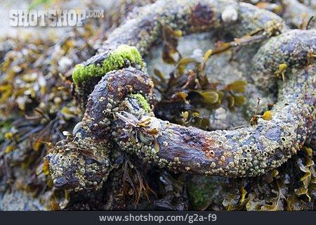 Algae, Maritim, Chain Link
