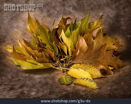 Autumn Leaves, Fall Colors, Tree Leaf