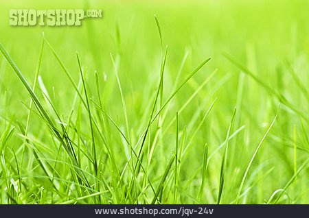 Meadow, Grass, Blade Of Grass