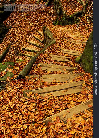 Forest, Staircase, Trail