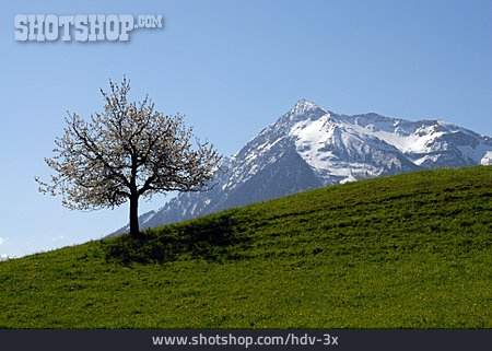 Mountain, Switzerland, Sneezing