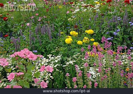 Garden, Flower Bed