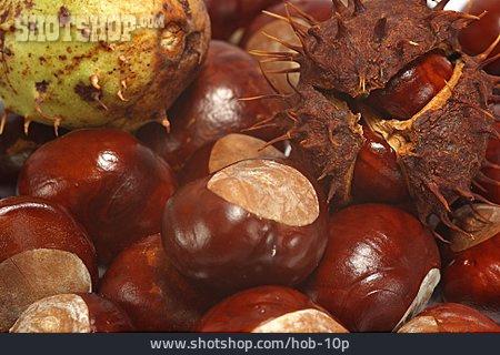 Chestnut, Chestnut