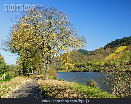 Moselle Cycle Route, Bicycle Lane, Moselle River