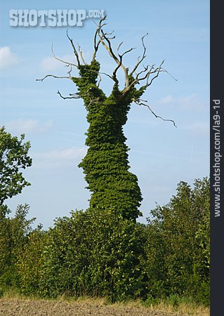 Tree, Overgrown, Overgrown