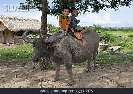 Riding, Water Buffalo