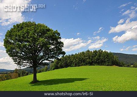 Landscape, Tree
