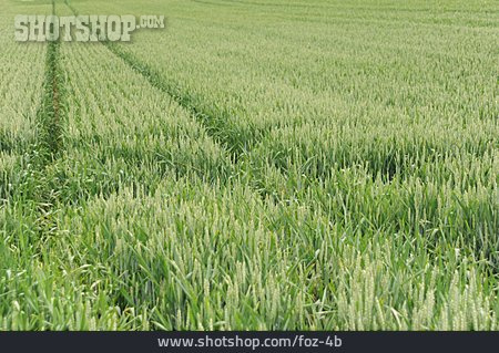 Wheat Field, Cereal Crops