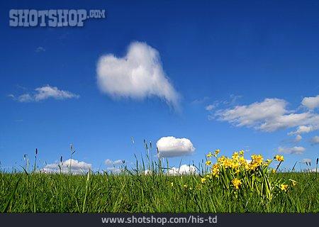Cumulus, Spring Meadow