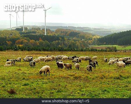 Environment Protection, Sheep, Pinwheel, Alternative Energy, Sheep Herd