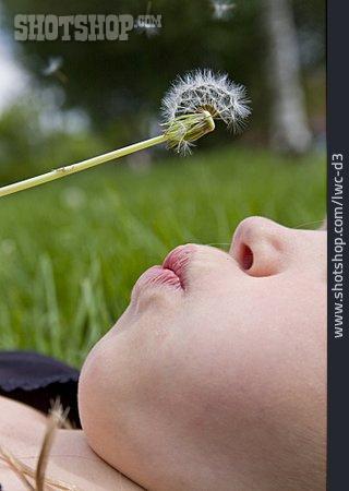 Dandelion, Blowing
