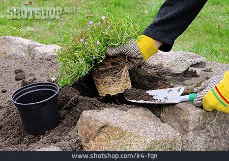 Rock Garden, Planting, Planting