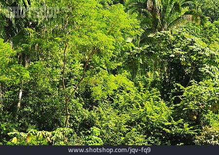 Jungle, Tropical, Rainforest