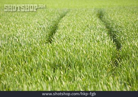 Field, Track Tractors, Cereal Crops