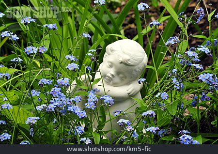 Forget-me-not, Angel